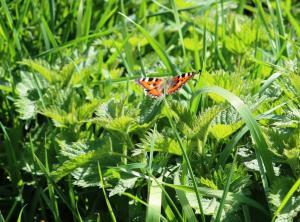 52_butterfly